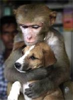 Monkey_dog